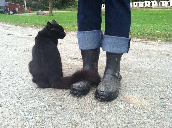 Liberty Hill Farm Inn: barn cat