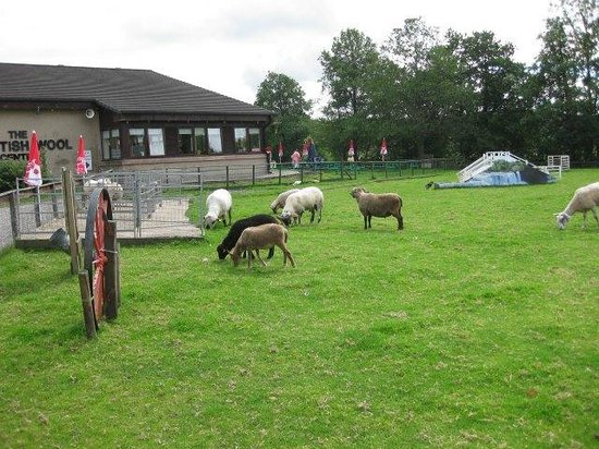 Sheep grazing outside the Scottish Wool Centre