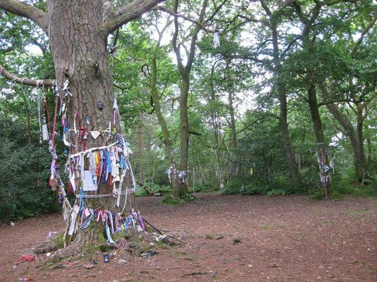 The Scottish Wool Centre: One of the many oak trees where people tie rags