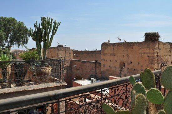 Riad Aladdin: Vistas del Palacio Badi desde la terraza (y cigüeñas)