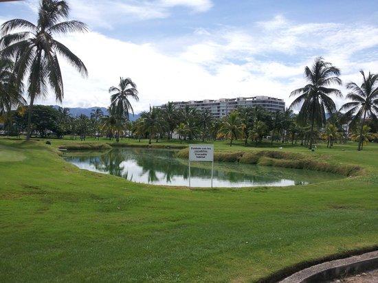 Casa Velas: Crocodile habitat on Marina Vallarta golf course