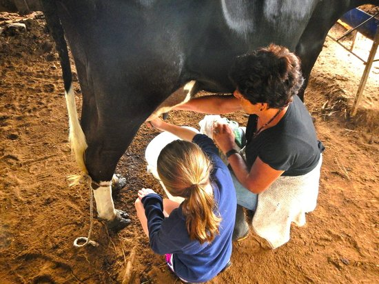 Cabañas Valle Campanas : Milking the cow with Ophelia