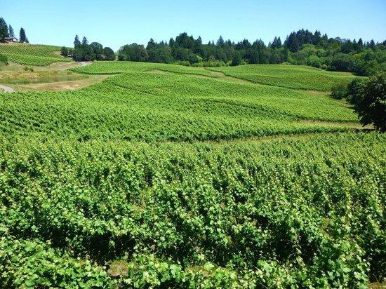 Elk Cove Vineyards: More Vines