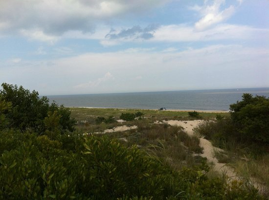 Cape Henlopen State Park Campground: View of the ocean from a look out point