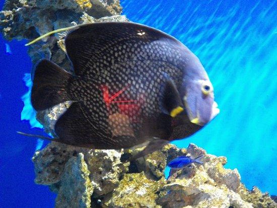 Newport Aquarium : One of many beautiful fish at the aquarium