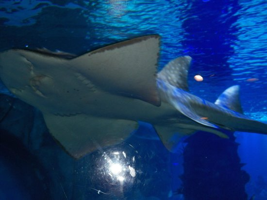 Newport Aquarium: Just one of the many sharks
