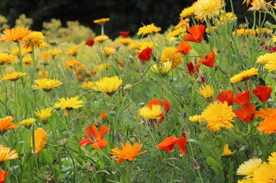 Dunlavin House : flower garden