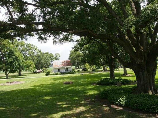 St. Joseph Plantation : view off the back porch
