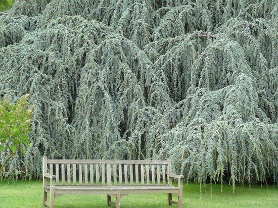 Arboretum de la Vallee-aux-Loups: Grand cedar libanais