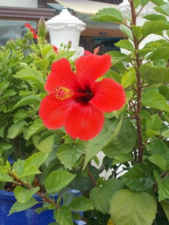 Hotel Villa Hibiscus: hibiscus