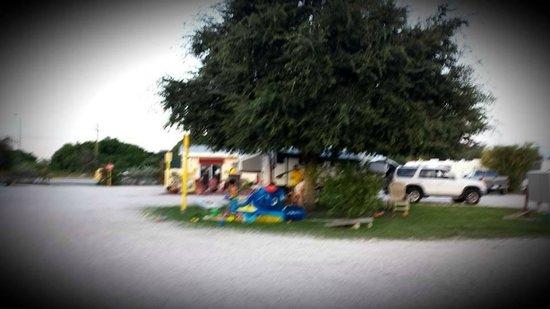 Fort Pierce KOA : The Big Tree is the shady spot...