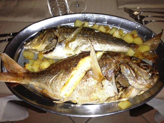 Ristorante Cavalluccio Marino : Una portata di...un piccolo pesce!!