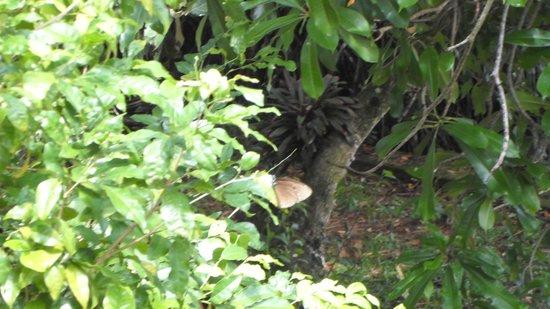 Riverside Inn Fuji Bentota: Schmetterlinge bei der Arbeit
