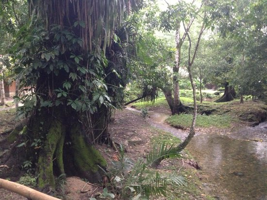 Kin Balam Cabanas: ostello giardino