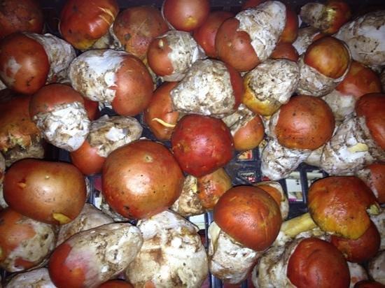 Osteria Basilico: Amanita Caesarea