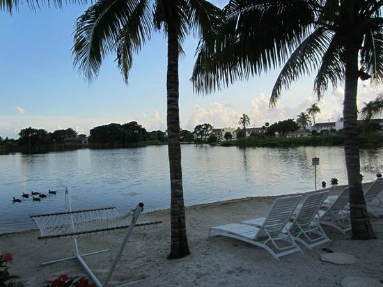 Marco Island Lakeside Inn: Birds and hammock and palm trees at the lake's beach