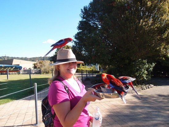 Southern Cross 4WD Tours: Parrot Feeding