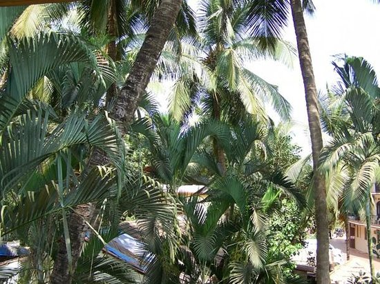 Belavida Hotel: Coconut trees and green grass with chairs to lounge all evening.