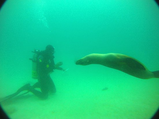 Galapagos Underwater: Friend observing Dive Course