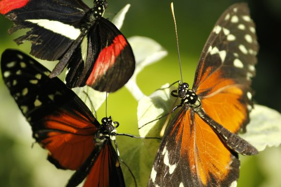 Wings of Mackinac Butterfly Conservatory: Meeting of the minds