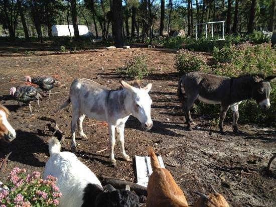 Pine Grove Campground and Waterfowl Park: Donkeys, goats, turkeys
