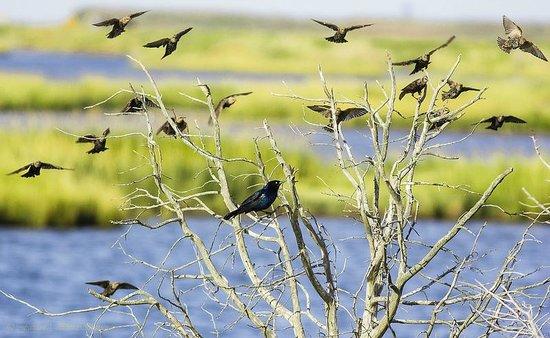 Edwin B. Forsythe National Wildlife Refuge: Flickr: http://flic.kr/p/fTNQwR