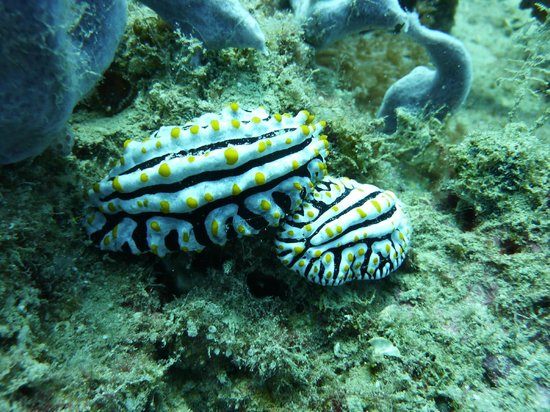 Scuba Nosy Be: nudibranch