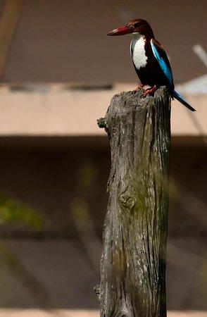 Kaziranga National Park: birding in kaziranga