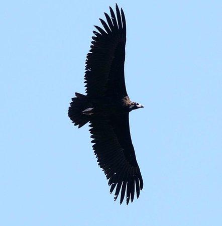 bird in kaziranga national park