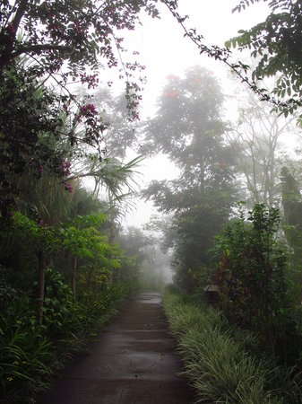 Munduk Moding Plantation : Misty walkway