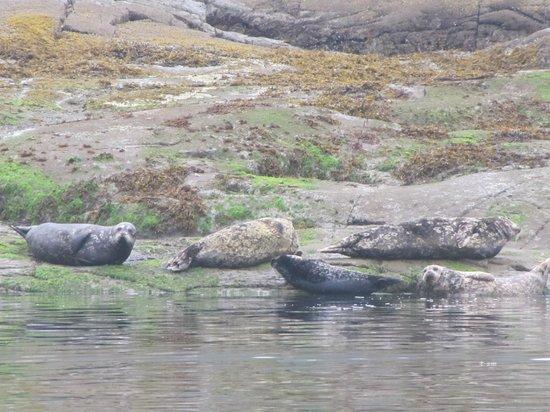 Aboriginal Journeys Wildlife and Adventure Tours: Sea Lions on Rocky shelf on return trip.