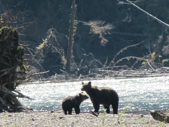 Aboriginal Journeys Wildlife and Adventure Tours: Momma and her youngin'.