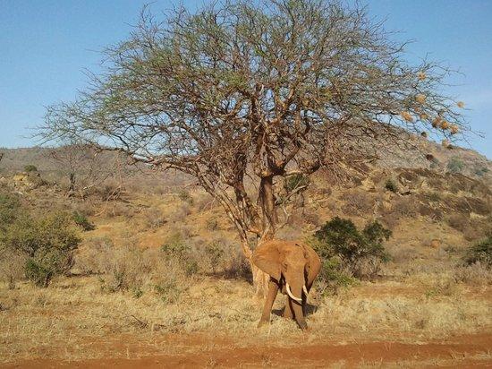 Ombretta Tours & Safaris - Day Tours: tsavo est
