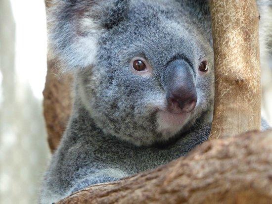 Sydney Wildlife Tours - Day Tours