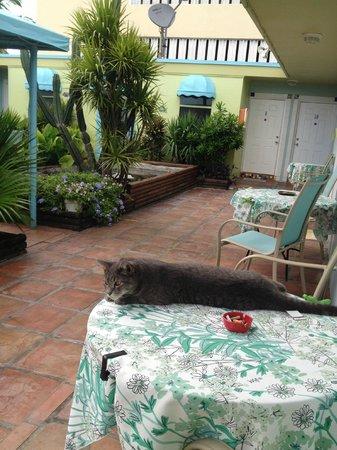 Angelfish Inn: Jerry - the best florida cat!