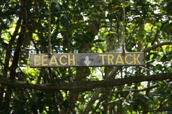 Cape Trib Camping: Beach tracks