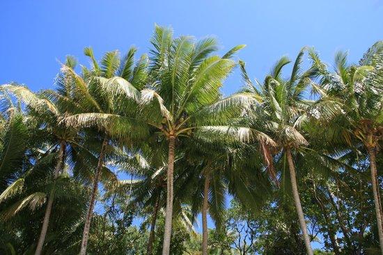 Cape Trib Camping: Palms