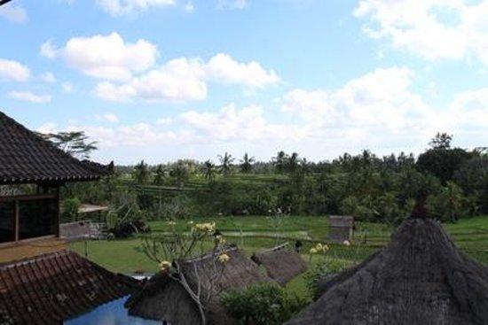 Bintang Pari Cottage : Aussicht von unserem Zimmer auf die Reisfelder