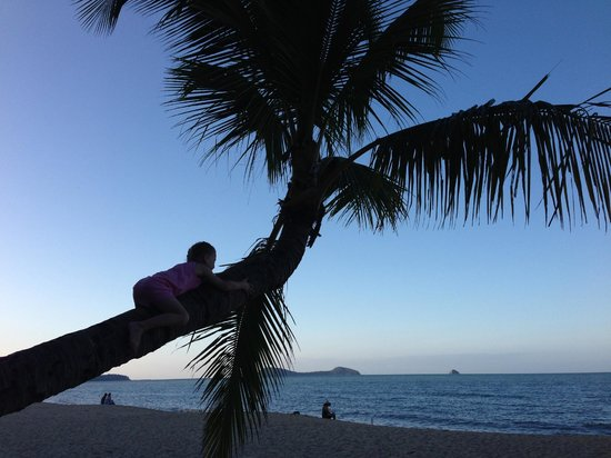 Kewarra Beach Resort & Spa: View from the beach shack or a palm tree which is popular to play on