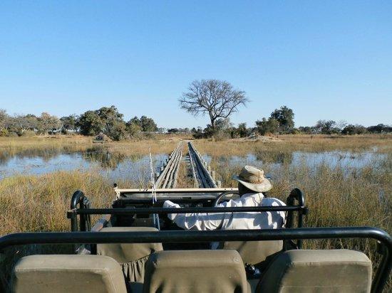 Wilderness Safaris Vumbura Plains Camp: on safari