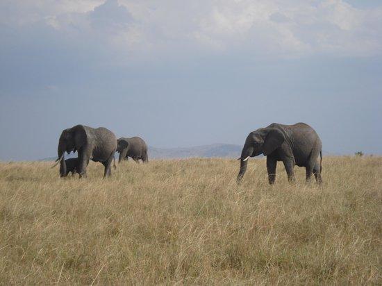 Tanke Tours : Elephants