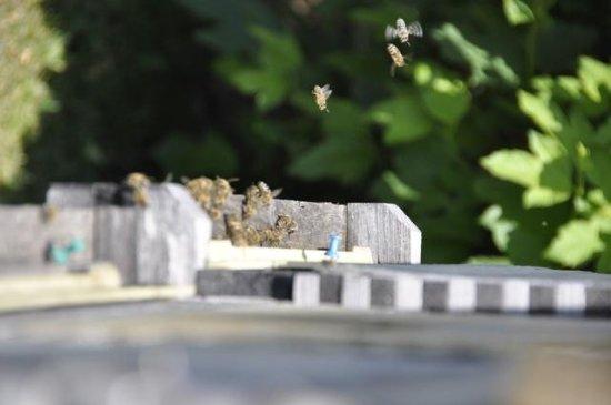 Imkerei Hottl: Busy Bees