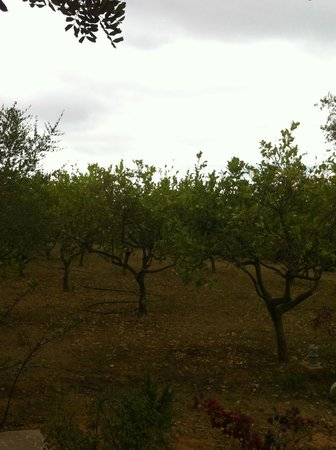 Agroturismo Can Pere Sord: orchard