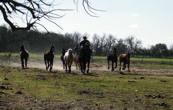 Touristic Argentinian Ranch Don Silvano: gaucho at Don Silvano farm