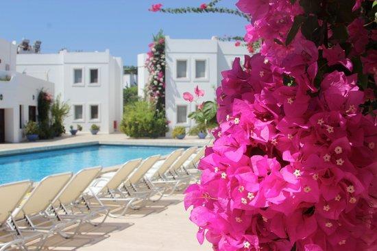 Seckin Konaklar Hotel: Pool area