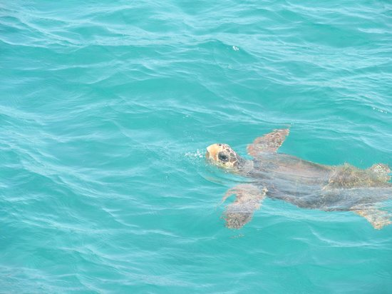 Galaxy Hotel, BW Premier Collection: Turtles that we saw!!