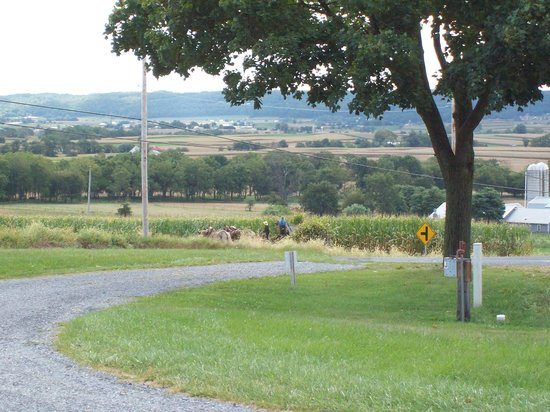 Country Haven Campground: View from site