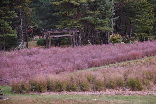 Bedrock Gardens : GrassAcre with Torii