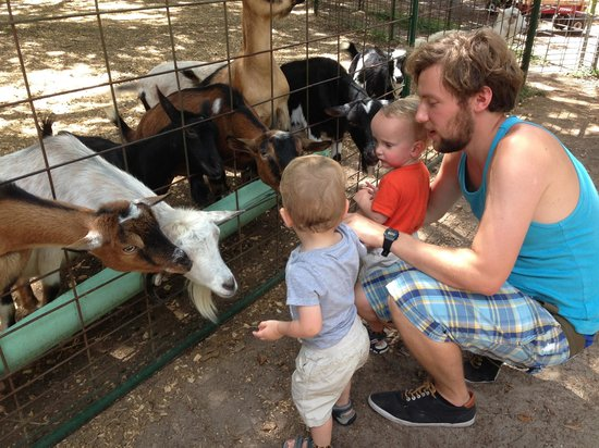 Green Meadows Petting Farm: Feeding the goats