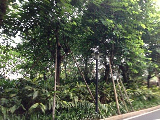 Goodview Hotel Tangxia: Lungo i viottoli della struttura